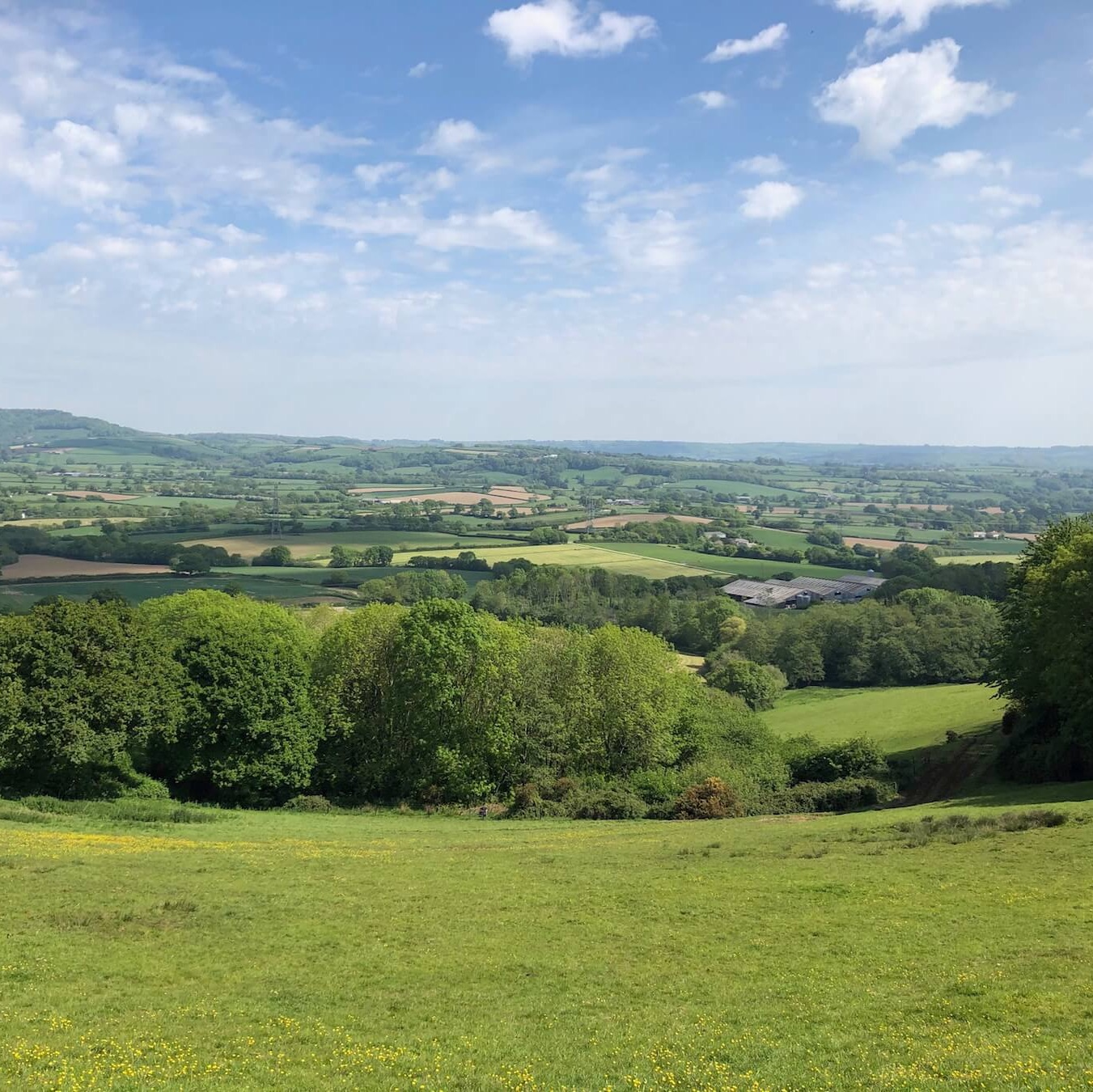 Looking over the Marshwood Vale